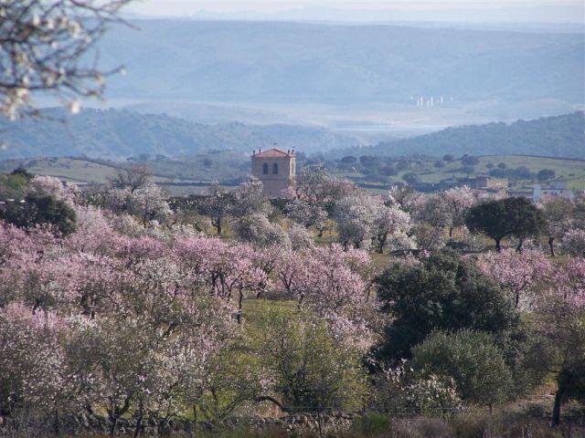 Almendros en Flor en Garrovillas de Alconétar