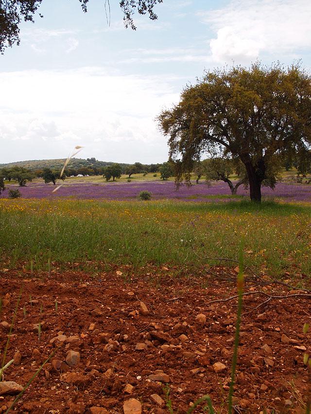 Parque de Cornalvo - Naturaleza en Extremadura