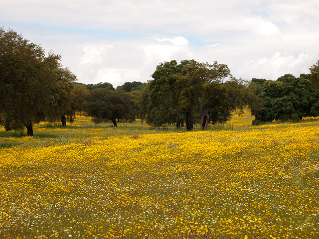 Flores Parque Natural de Cornalvo