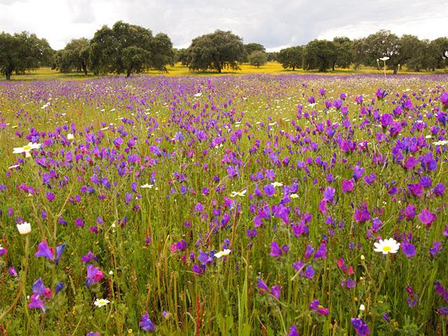 Parque Natural de Cornalvo en Primavera