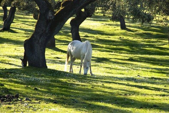 Dehesa Jerez de los Caballeros - Foto: albayanaideas.blogspot.com