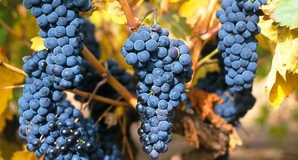 Foto: http://www.vinetur.com